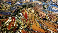 Yuanyang Rice Terraces  - Chinas Perfect Palette     -  (Meiguoxing) Tags: china photography  yunnan attraction      yunyang   yuanyangriceterraces