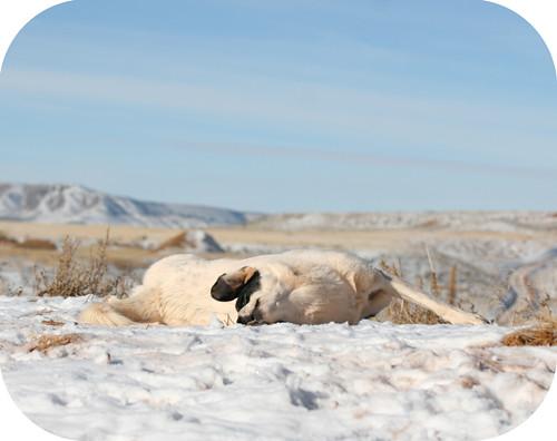 snowbathing2