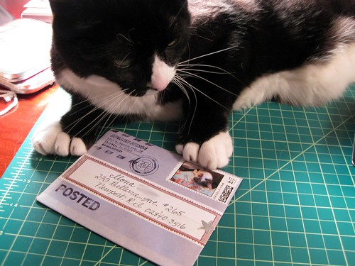 Letter cat contemplates stamp cat
