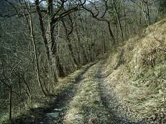 IMGP0339 (gzammarchi) Tags: strada italia natura campagna belvedere paesaggio collina bosco vicchio camminata sterrato itinerario sassoleone casteldelriobo