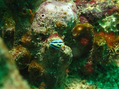 IMG_2743 (pasto) Tags: travel vacation underwater diving malaysia borneo kotakinabalu scubadiving downbelowscuba