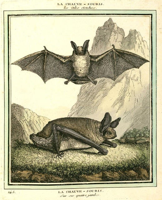 Bat on all-fours