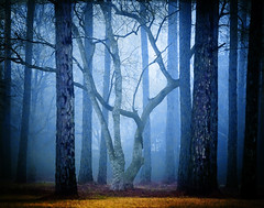 the court jester (slight clutter) Tags: morning blue trees winter mist tree nature fog fairytale forest woodland landscape rebel woods texas jester decorative branches houston magical treetrunks