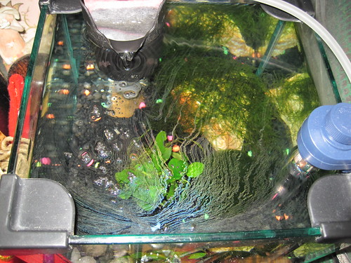 film aquarium whisper problem growth tetra freshwater 3i intank