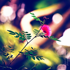 Listening to VCR - by the XX (happy Slider Sunday!) (SemiCharmedLife ()) Tags: nature colors dof bokeh inarut natureycrap