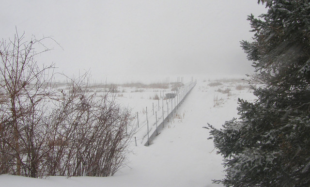 On a February walk