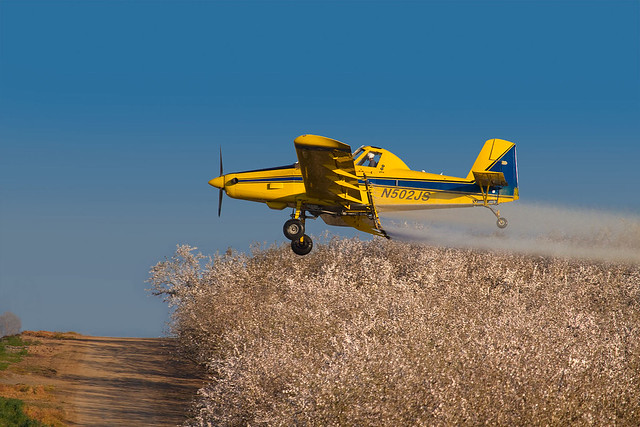 Crop Duster Spraying Almond Orchards