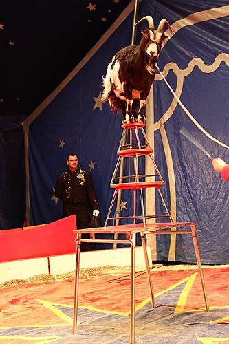 Circus22