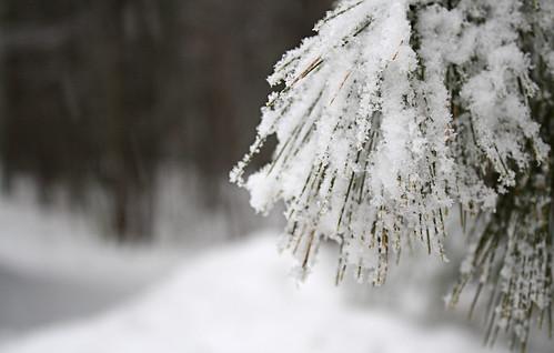 More Snow {184/365}