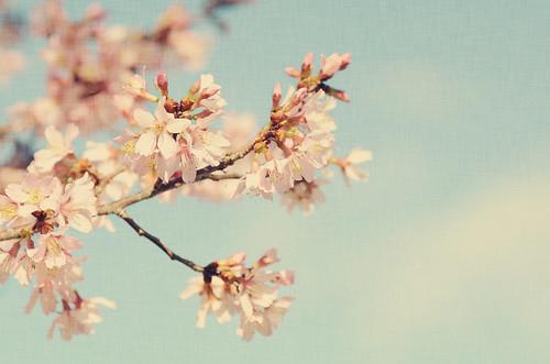 Spring Blooms by Rachel*Nicole