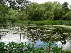 1193 (benbobjr) Tags: uk england mill museum river birmingham cole unitedkingdom lordoftherings shire westmidlands tolkien watermill moseley middleearth birminghamuk rivercole midlands sareholemill theshire matthewboulton