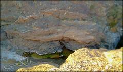 C360_2011-02-23 17-33-54 (MagicPAD - الكعبي) Tags: uae الإمارات الجزيرة الظاهر ناصر الكعبي الخطوة مصح محضة