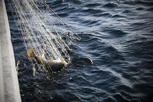 fisherman Norway, Carolin Weinkopf, fishing, Alesund, fisherman, skipper, fish, Norway, Norwegen