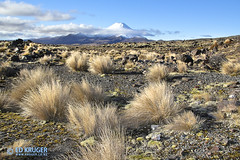 Mount Ngauruhoe (Ed Kruger) Tags: travel blue winter newzealand sky plants mountain snow stone clouds volcano desert mount tongariro volcanic aotearoa desertroad mountngauruhoe edkruger