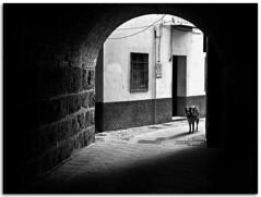 Pasa si te atreves.... (Antonio Carrillo (Ancalop)) Tags: street bw espaa dog white black blanco canon calle spain andalucia perro granada 1750 antonio tamron f28 carrillo negre callejon 50d ancalop