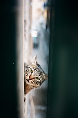 Pepito (Toobee not yet a photographer) Tags: cats cat chats chat tuscany toscana gatto gatti toskana