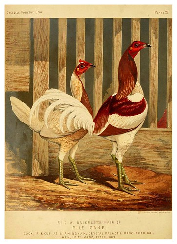 003-The illustrated book of poultry. With practical scheduals…1873-Lewis Wright