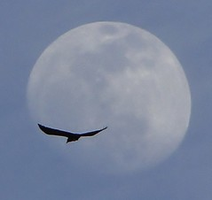 "crow moon • <a style=""font-size:0.8em;"" href=""http://www.flickr.com/photos/10528393@N00/5503183605/"" target=""_blank"">View on Flickr</a>"
