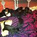 My 11 Rottweiler puppy friends.  3 1/2 weeks old.