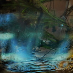 Abraham Sutzkever: Griner Akwarium ~ Grnes Aquarium --- Water Mirror - Wasser Spiegel --- Aktion: Glas Wrfel Wasser ~ Glas Cube Water (hedbavny) Tags: vienna wien blue autumn winter summer plant reflection green art water glass studio austria mirror sketch sterreich spring wasser underwater sommer spiegel kunst diary herbst jahreszeit pflanze sketchbook september note cube mementomori grn blau rotten transition root decomposition spiegelung tagebuch glas wrfel glaswrfel aktion frhling wurzel atelier vanitas unterwasser werkstatt undine verfall verwelkt skizze notiz arbeitsraum melancholie radix wasserpflanze wasserspiegel skizzenbuch bergang wienvienna maigrn sterreichaustria scheintod aquariumplant cmwdblue transitio aquariumpflanze hedbavny ingridhedbavny aktionisums
