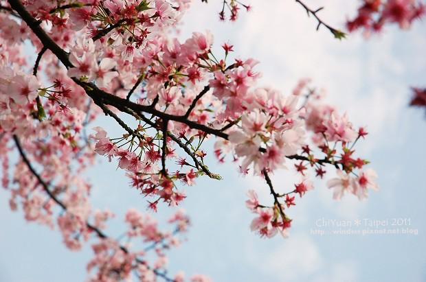 2011陽明山花季15.jpg