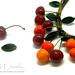 cherry det
