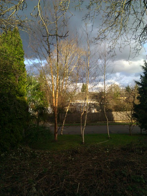 View of birches and alders against a dark cloudy sky