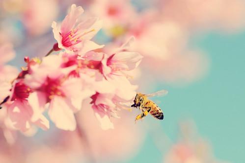 Bee Happy :) by Rachel*Nicole