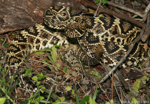how to get away from a rattlesnake