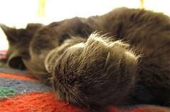 artigli (Seio) Tags: 30 cat canon is gatti sx artigli