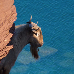 A goat view from the edge (Bn) Tags: blue red sea moon holiday beach water animal forest swimming swim landscape geotagged island back high dangerous spain sand woods mediterranean crystal cove dunes dune rocky peaceful goat lagoon calm cliffs unesco formation virgin caves pines edge limestone vegetation nudist coastline remote dare calas nudity bays desolate topf100 climate isolated menorca laid secluded minorca reddish unspoiled balearic watercrystal hillsides naturists 100faves wildgoat holidaysvacanzeurlaub nuturism caladelpilar geomenorca coastlinenatural environmentsunescobiosphere reservemediterranean waterparadiseparadise beachspainbalearicsmenorcaturquoise blueminorcabalearic islandsrocky geo:lon=3973548 geo:lat=40052499