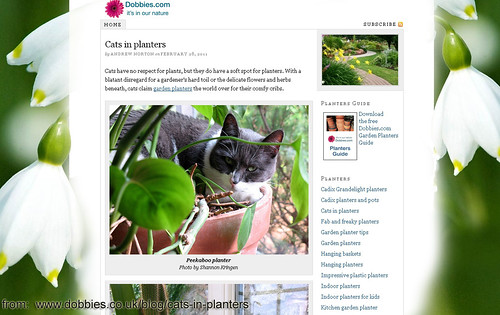 cats in planters, stella published!
