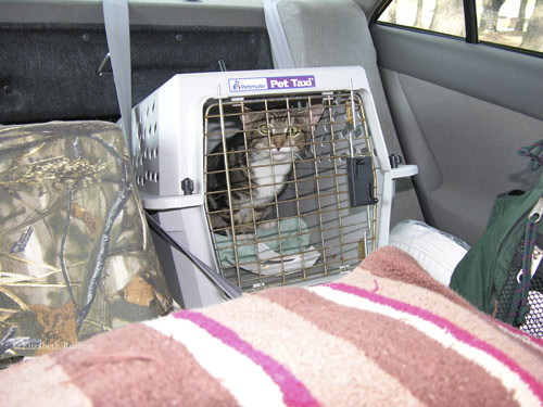 Gypsy goes for a car ride