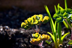 afternoon delight (peet-astn) Tags: spring afternoon sunlight green flower fiore