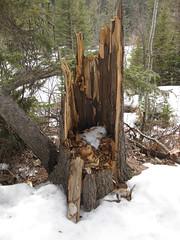 Stump (benlarhome) Tags: calgary stump fishcreekpark
