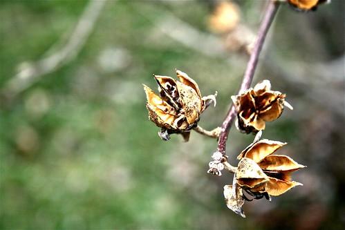 Damaged Spring