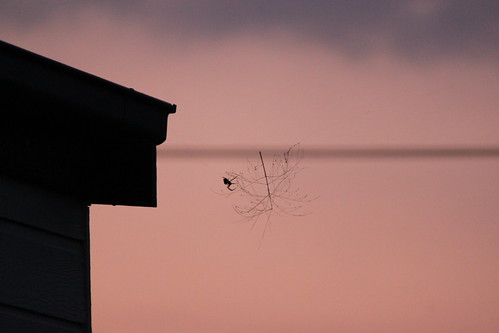 Spider in the sunset