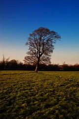 IMG_2048 (martinsmith99) Tags: tree farmland vivitarseries11935mm