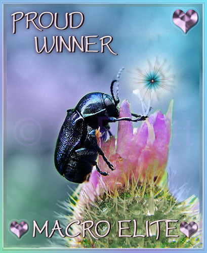 "MACRO Elite PROUD WINNER Profile Icon by christabel's artworks, on Flickr"" © Chris Elliott and natalija2006."