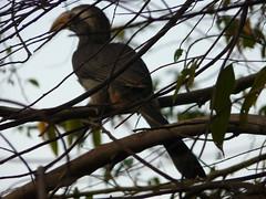 P1150641 (babsybou) Tags: travel india birds silent watching kerala du valley yatra sud inde attapadi birdswatching babsybou malleeshwaramjunglelodge pettickal