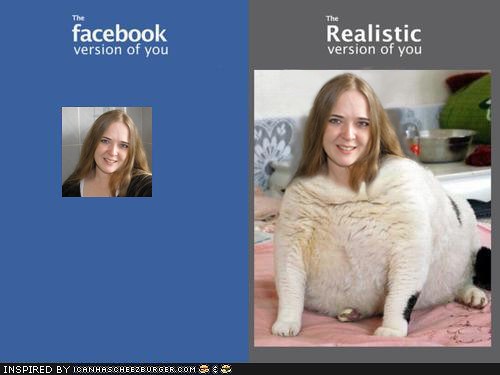 Lolcat Stello on Facebook =D
