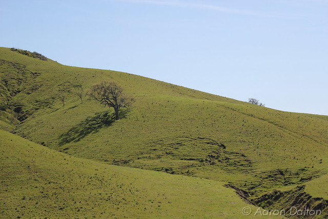 Tree on Yellow Green Slope