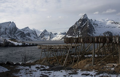 drying cod in Hamnoy (trailrecipes) Tags: cod lofoten hamnoy norwaylofotenmarch2011
