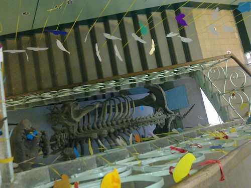 Птички в Зоологическом меузее МГУ