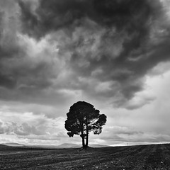 The Lonely Tree (DavidFrutos) Tags: bw storm mountains tree monochrome field pine clouds square landscape monocromo i