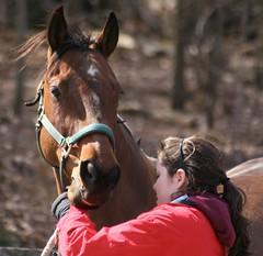 IMG_0523 (KJKing) Tags: wild horses horse fun outside jump jumping free pony snf secondnaturefarm freejumpclinic