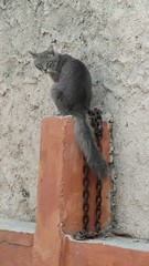 Free! (Ani Carrington) Tags: wall cat grey tail chain feralcat feral straycat