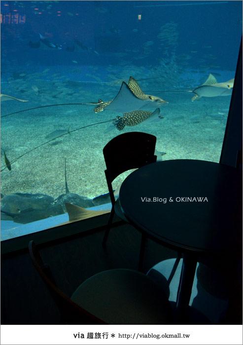 【沖繩景點】美麗海水族館~帶你欣賞美麗又浪漫的海底世界!37