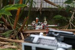 We've Spotted them. (rnakama_photos) Tags: starwars yoda lego luke tie xwing darthvader legostarwars tiefighter stromtrooper ef70200mmf28lisusm legoxwing legotiefighter