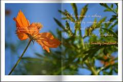 To love someone is nothing . (Sanhita Bhattacharjee/সংহিতা ভট্) Tags: india flower love nature nikon getty sweetheart marygold tripura phool nikkor1855mmlens sanhitabhattacharjee
